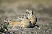 Photographs of the landscapes and wildlife within Badlands National Park, South Dakota