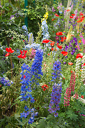 colorful flowers in a garden resembling Monet's Garden