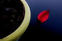 Vaso con foglia rossa