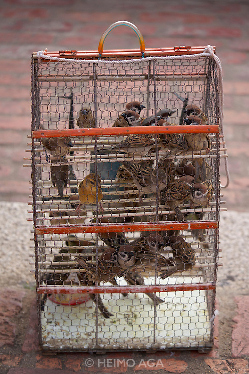 Phnom Penh, Cambodia. Wat Phnom. Lucky birds waiting for release and re-capture.