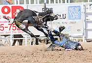 Bull rider does face-plant