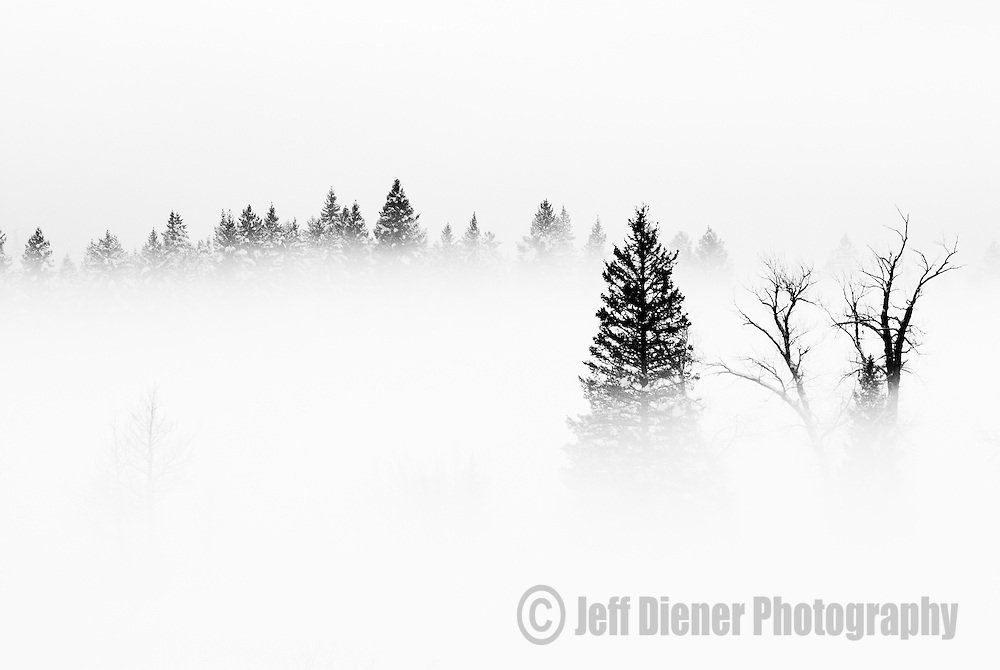 Valley fog settles into rural pastures in Teton Valley, Idaho.