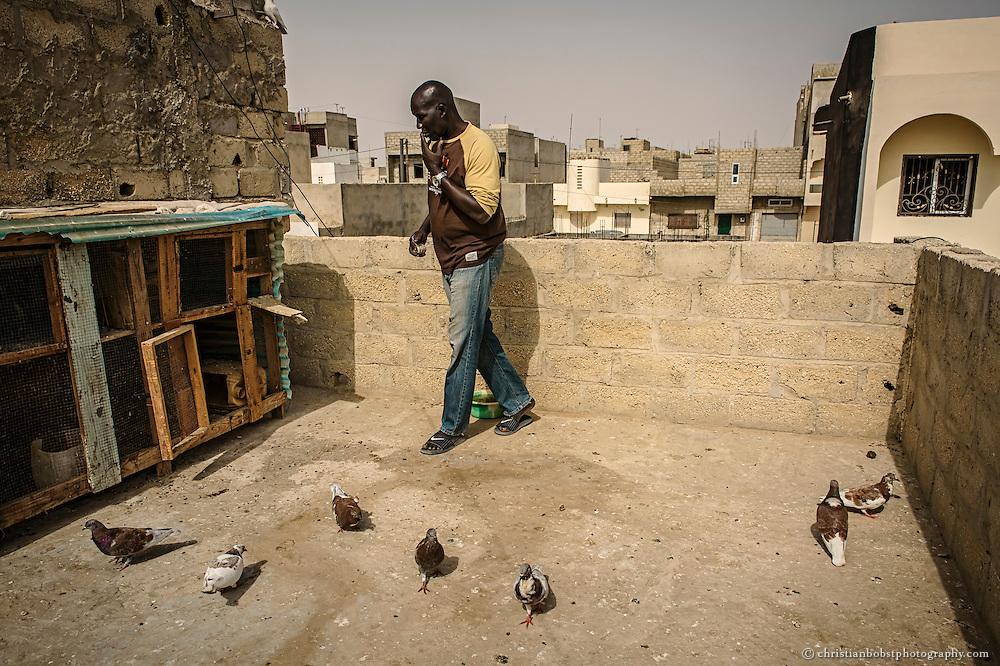 Lac De Guiers 1 füttert seine Taube auf der Dachterasse seines Hauses in Dakar.