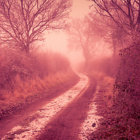 Winter in the countryside in Suffolk England with track and hedgerows