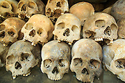 "30 JANUARY 2013 - CHEOUNG EK, CAMBODIA: Human skulls on display in the Buddhist stupa at the Choeung Ek killing fields. Choeung Ek is a former orchard and Chinese cemetery about 17 km south of Phnom Penh, Cambodia. It is the best-known of the ""Killing Fields"", where the Khmer Rouge regime executed over one million people between 1975 and 1979. Mass graves containing 8,895 bodies were discovered at Choeung Ek after the fall of the Khmer Rouge regime. Many of the dead were former political prisoners who were kept by the Khmer Rouge in their Tuol Sleng detention center, a former high school in Phnom Penh.      PHOTO BY JACK KURTZ"