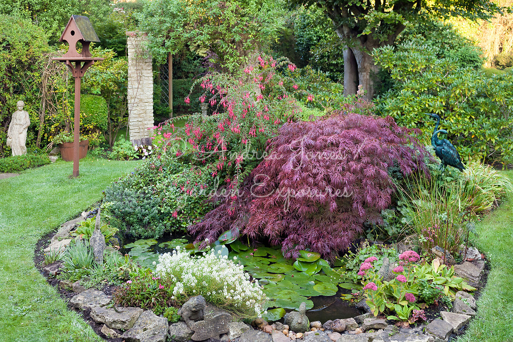 Domestic garden including a pond with waterlilies, Acer palmatum dissectum, Sedums, bird table and bird sculptures
