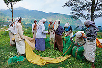 Sri Lanka, province du centre, Nuwara Eliya, plantations de thé de Ceylan, cueillette du thé, les cueilleuses tamoules attendent pour faire peser leur récolte du jour // Sri Lanka, Ceylon, Central Province, Nuwara Eliya, tea plantation in the Highlands, Tamil women tea pickers wait to get their tea leaves weighted to make their daily targets
