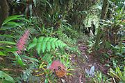 Tapichalaca Reserve; Ecuador, Zamora-Chinchipe