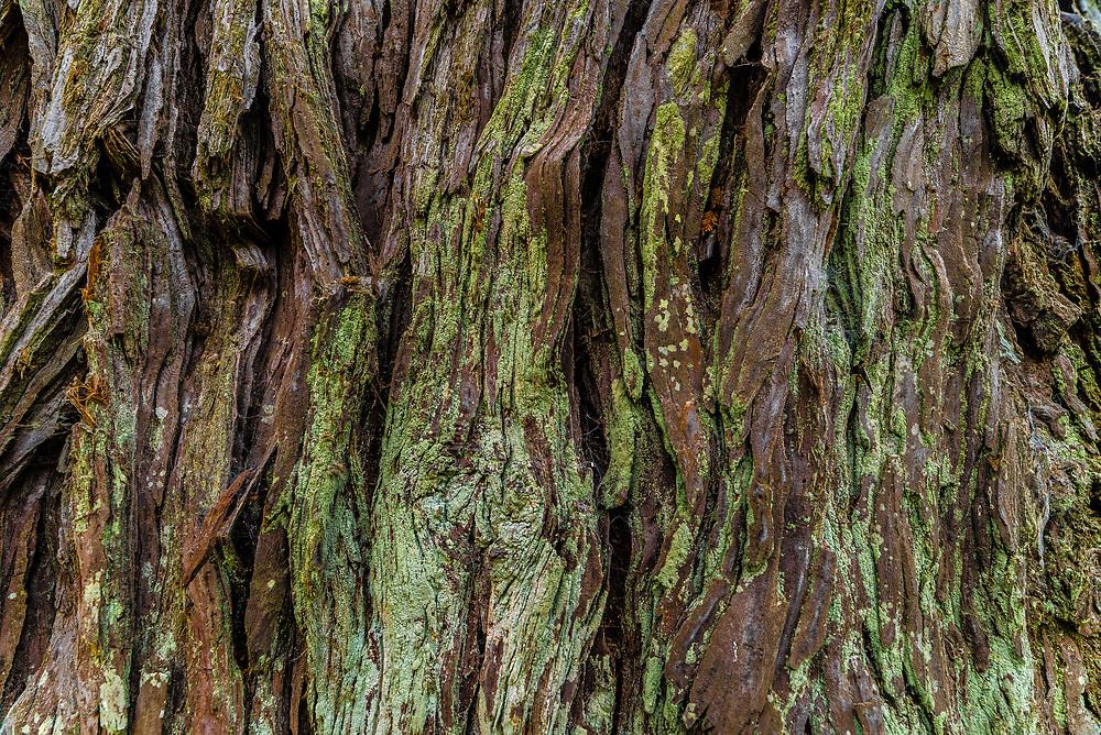 This is the bark of a redwood tree taken up close.<br /> <br /> Camera <br /> NIKON D610<br /> Lens <br /> 14.0 mm f/2.8<br /> Focal Length <br /> 14<br /> Shutter Speed <br /> 1/50<br /> Aperture <br /> 8<br /> ISO <br /> 450
