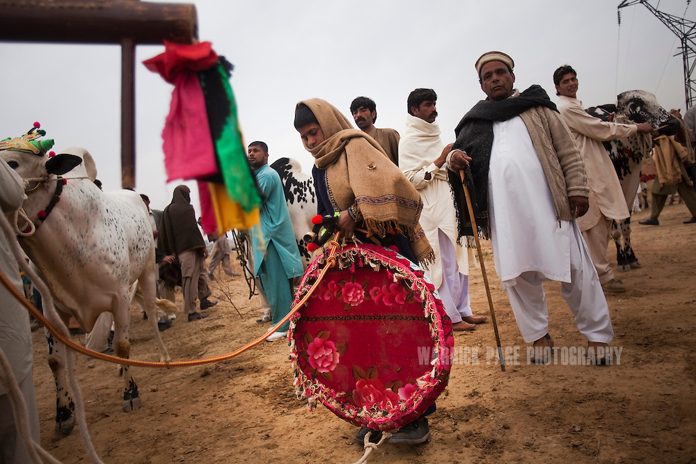 RAWALPINDI, PAKISTAN - FEBRUARY 5: A boy holds on to a 'Khaar' which is used by jockeys, at a bull racing event on February 5, 2011, in Rawalpindi, Pakistan. Bull racing takes place during the winter months throughout Pakistan where many come to watch or gamble on the contenders. (Photo by Warrick Page)