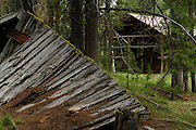 Moose Creek, Salmon, Old Building, Building, Forest, Salmon Challis National Forest, Idaho