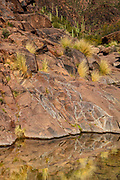 Water collects in a small pool in a ravine in the Superstition Wilderness near Gold Canyon, Arizona. The water source in the Sonoran Desert was important to the Native American Hohokam people, who settled in the area as early as 500 A.D. The Hohokams left behind some petroglyphs, which are visible on the rocks in the upper left corner of the image.