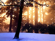 Last Rays Filter Through Mist, Mount Tabor Park, Portland, Oregon. Photo 12/25/2008.