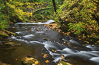 Whatcom Creek in fall, Bellingham, Washington