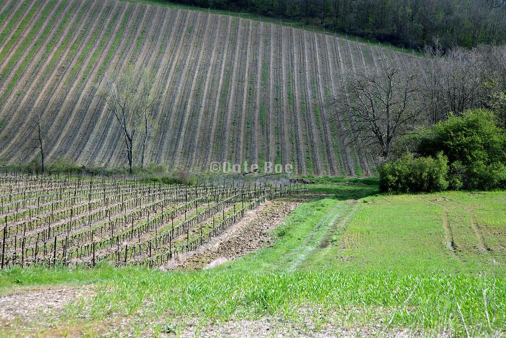 vineyard France the Languedoc end of April