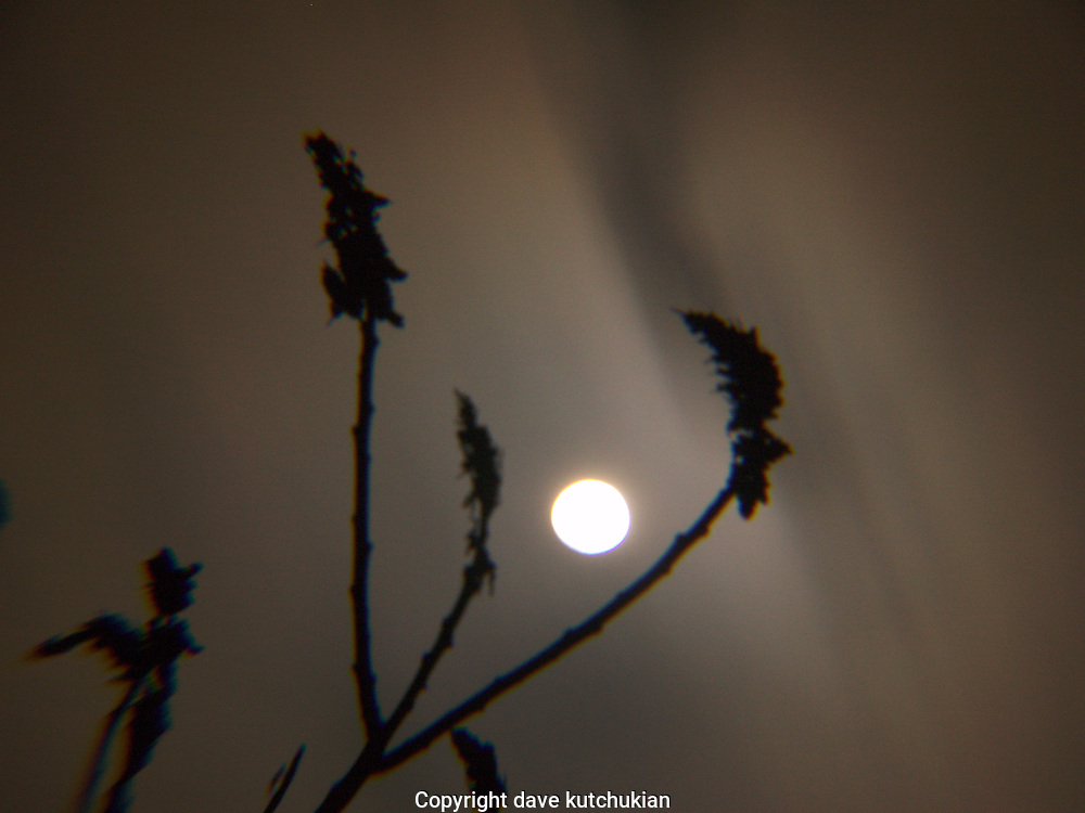 the clouds of an approaching storm race past the full moon,during a time exposure on a cold winter's night.  Sumac branches are sillouetted in the foreground no property release