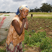 Livelihoods Recovery Following Post-Elections Violence (UNDP)