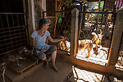 EVA RUPPEL sits at her front door on her rural property near Kandy, Sri Lanka, on Wednesday, February 21, 2018. Ruppel does not cage the +/-170 dogs she has rescued, allowing them freedom to interact in small packs in multiple pens throughout her property, as well as inside her home. Ruppel created Tikiri Trust, with the financial assistance of her father, to rescue and rehome Sri Lanka's street dogs.<br /> <br /> <br /> It is impossible to visit Sri Lanka without seeing street dogs in nearly every public space, near hotels, guest houses and restaurants, schools, offices, markets, hospitals, police stations, bus terminals, railway stations, temples, etc. These dogs do not have their own homes, but they are usually highly tolerated and are typically fed collectively by people in a particular area.<br /> <br /> According to the NGO, Kandy Association for Community Protection through Animal Welfare (KACPAW), 100 unsterilized dogs will give rise to 3,000 dogs in one year. The Sri Lankan government, as well as several NGOs, work to spay/neuter animals, but there is need to educate the public and maintain funds to stay on top of their efforts.<br /> <br /> Eva Ruppel left Germany for a three-month visit to Sri Lanka, which included time in a Buddhist meditation retreat, and she remains in this island nation 37 years later.<br /> <br /> While married, Ruppel&rsquo;s husband asked that the couple keep only three dogs in their home at any one time, and she respected his wishes. This 60-something year old lost her husband to a ruptured brain blood vessel in 1995 when he was 51 years old, after nine years of marriage. After his death, she began rescuing more and more animals and she now lives with 170 dogs, plus a dozen or so cats.<br /> <br /> With the support of her father, she started Tikiri Trust. Her father passed away in 2011, and he left her an inheritance, which she continues to use to support her cause. <br /> <br /> Ruppel, who is fluent in German, English and Sinhala, said that she has found homes for &ldquo;hundreds, if not thousands&rdquo; of dogs. She