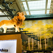 African mammals exhibit at the Smithsonian Institution's National Natural History Museum in Washington DC.
