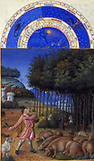 'The Très Riches Heures du Duc de Berry Is a French Gothic illuminated manuscript. The Très Riches Heures is a prayer book created for John, Duke of Berry, by the Limbourg brothers between 1412 and 1416. The book was completed by Jean Colombe between 1485 and 1489. The manuscript is held at the Musée Condé, Chantilly, France. this folio (November)shows a traditional autumn scene of autumn. A swineherd, accompanied by a mastiff, grazes a herd of pigs'