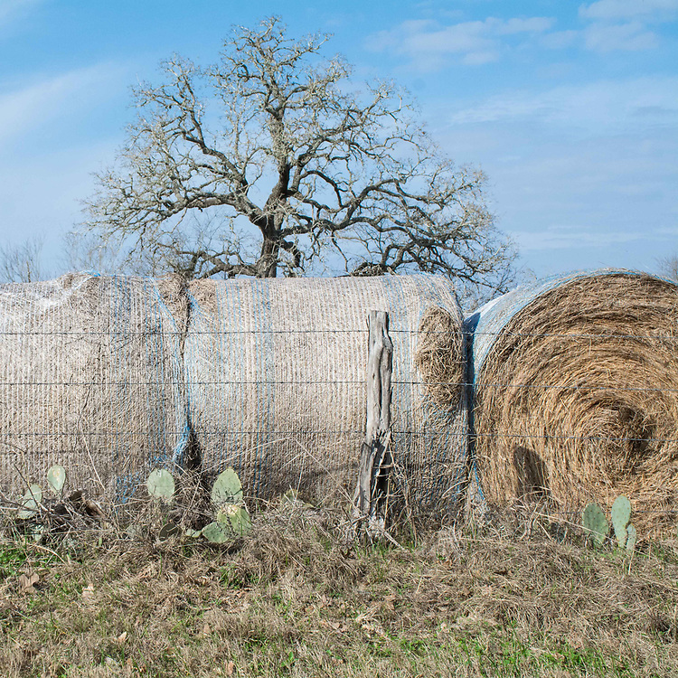 Bails of hay and cacti line the road side leading to where my family lived.