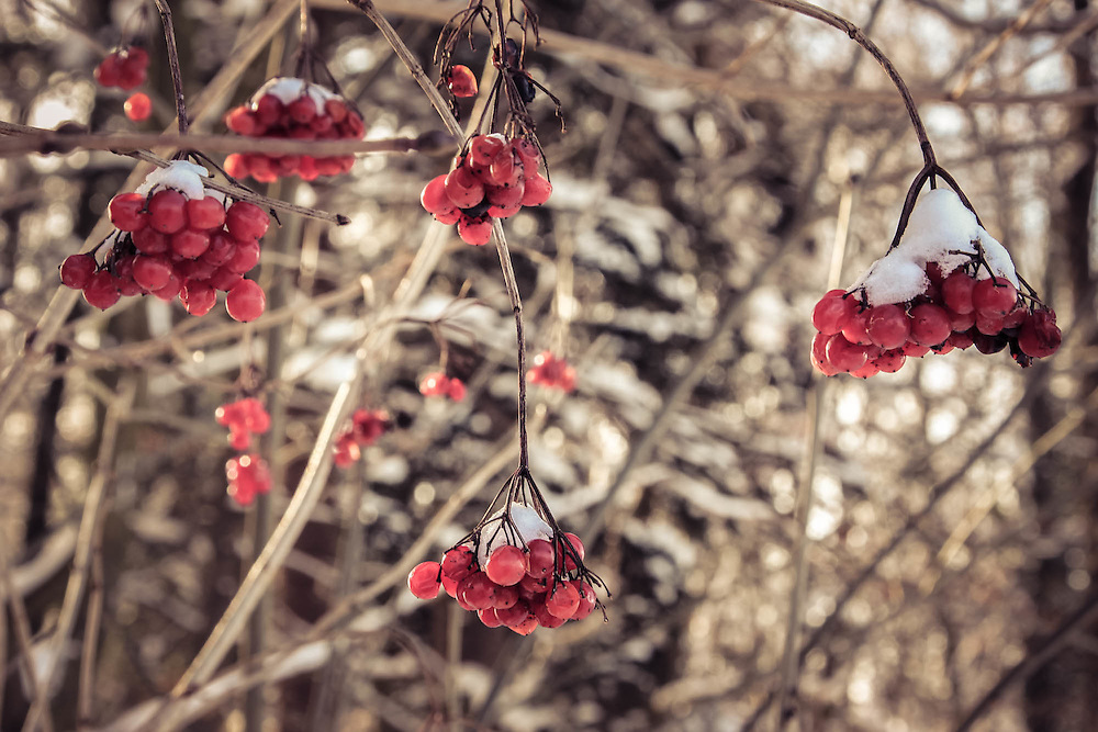 A seasonal journey in a fairytale world