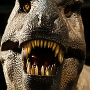 Chicago_Field_Museum_ T-rex_Animatronics
