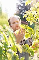 Gardener examining plants at garden
