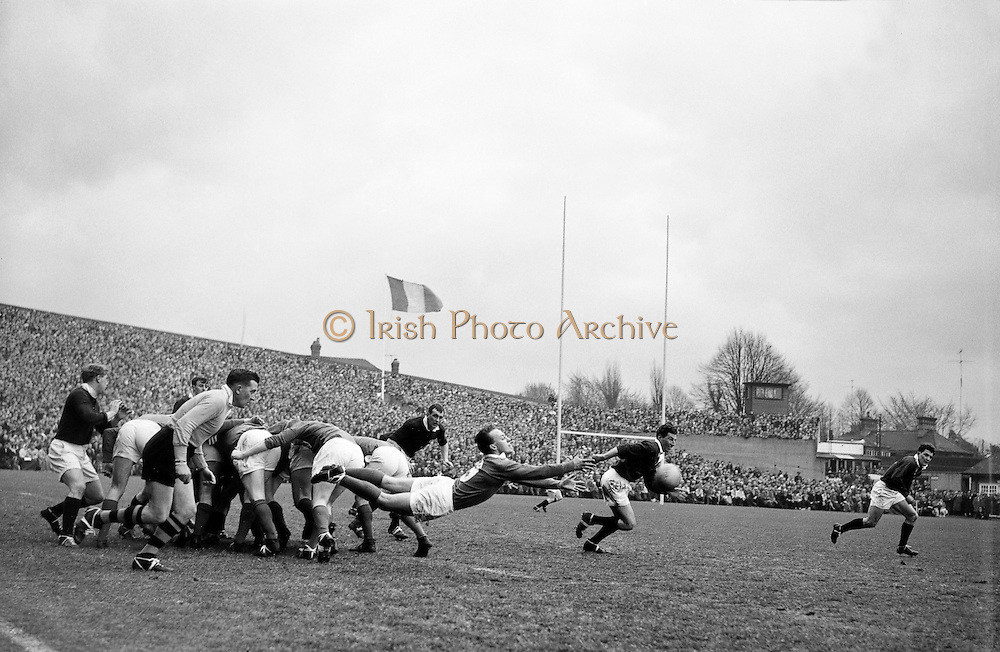 Irish scrum half J T M Quirke gets the ball away from a set scrum, .Scottish forwards, Douglas, on the left and Glasgow, on the right, break from the pack, ..Irish Rugby Football Union, Ireland v Scotland, Five Nations, Landsdowne Road, Dublin, Ireland, Saturday 24th February, 1962,.24.2.1962, 2.24.1962,..Referee- N M Parkes, Rugby Football Union, ..Score- Ireland 6 - 20 Scotland, ..Irish Team, ..F G Gilpin, Wearing number 15 Irish jersey, Full Back, Queens University Rugby Football Club, Belfast, Northern Ireland,..W R Hunter, Wearing number 14 Irish jersey, Right Wing, C I Y M S Rugby Football Club, Belfast, Northern Ireland, ..M K Flynn, Wearing number 13 Irish jersey, Right Centre, Wanderers Rugby Football Club, Dublin, Ireland, ..D Hewitt, Wearing number 12 Irish jersey, Left centre, Instonians Rugby Football Club, Belfast, Northern Ireland,..N H Brophy, Wearing number 11 Irish jersey, Left wing, Blackrock College Rugby Football Club, Dublin, Ireland, ..G G Hardy, Wearing  Number 10 Irish jersey, Stand