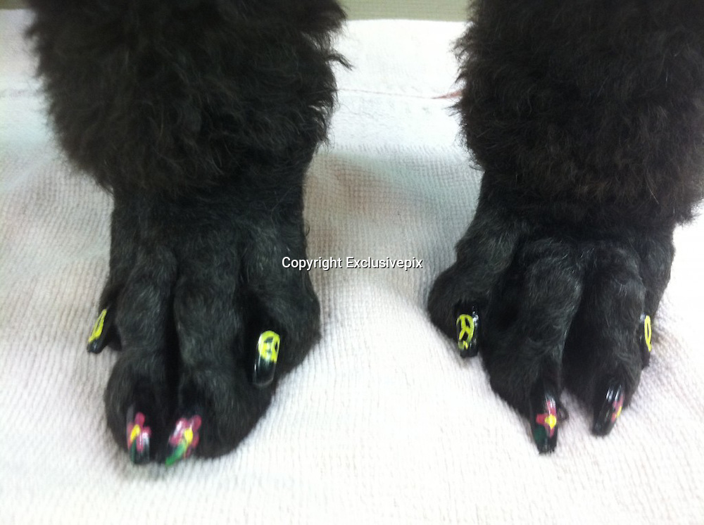 Nail art for dogs: the latest trend for pampered pooches is barking mad<br /> <br /> Your dog can already enjoy pampering session at doggie grooming parlours and sport its own designer outfit from luxe labels Mulberry and Burberry.<br /> But now there's a new fashion for the stylish canine.<br /> Hot on the paws of dip-dyes for dogs comes doggie nail art - the latest word in pedicures for pampered pooches.<br /> Doggie nail art is taking the US by storm and being applied in salons up and down the continent.&nbsp;<br /> The trend appears to be the next big thing for zany dog lovers such as to US Apprentice star Aubrey O'Day who recently gave her own dogs a pastel-coloured dip-dye make-over.<br /> <br /> Warren London, the website of an American doggie-product wholesalers which sells special Pawdicure Polish Pens for either salon or at-home use, proves that there are no limits to the lengths owners will go to beautify their dogs.<br /> It even features a blog where proud owners upload shots of their own efforts practised on long-suffering pooches.&nbsp;<br /> The tongue-in-cheek names of the colours certainly give our own Nails inc. a run for its money with hues amusingly titled Paw-ty In Pink, Smooch The Pooch Purple, Orange You Glad I'm Neon and Walk In The Park Green.<br /> <br /> For fidgety customers, the varnishes are quick drying and are ready for walkies in only 40 seconds.<br /> The makers boast that, 'only one layer application is necessary for that great look for your pampered pup.'<br /> Fortunately for Fido and co though, said pens are water based and non toxic.<br /> The site also features an online tutorial to ensure that users get the best our of their Pawdicure Polish Pens.<br /> It would seem that celebrity nail art fans such as Katy Perry have got a lot to answer for.&nbsp;<br /> However, whether the trend translates to the British market remains to be seen.<br /> &copy;WarrenLondon/Exclusivepix