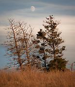 At the National Bison Range Wildlife Refuge in Montana. Missoula Photographer, Missoula Photographers, Montana Pictures, Montana Photos, Photos of Montana