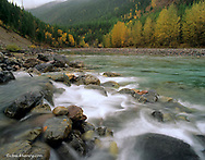 Bear Creek merges with the Middle Fork of the Flathead River in the Flathead National Forest of Montana
