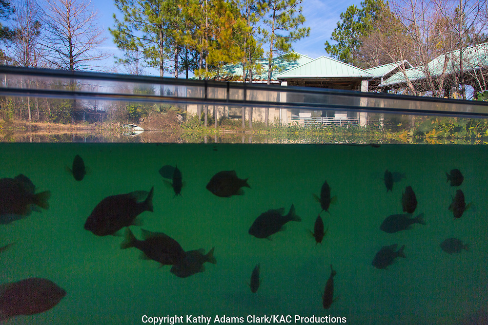 Texas Freshwater Fisheries Center, in Athens, Texas, celebrates fishing and the importance of fish in the environment.