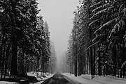 Snow falls on Route 62 to Crater Lake National Park, Ore., on April 29, 2008.