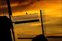 NLD-20021229-SCHERMERHORN: In de vroege ochtend zag het er nog niet uit dat de rest van de zondag een somber karakter zou krijgen. Vogels zoeken rust op de wiek van een van de molens bij het Noordhollandse Schermerhorn. ANP FOTO KOEN SUYK