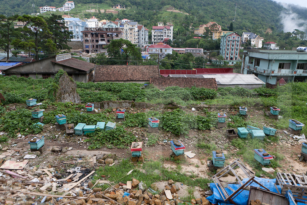 Beehives in Tam Dao with the city in background.