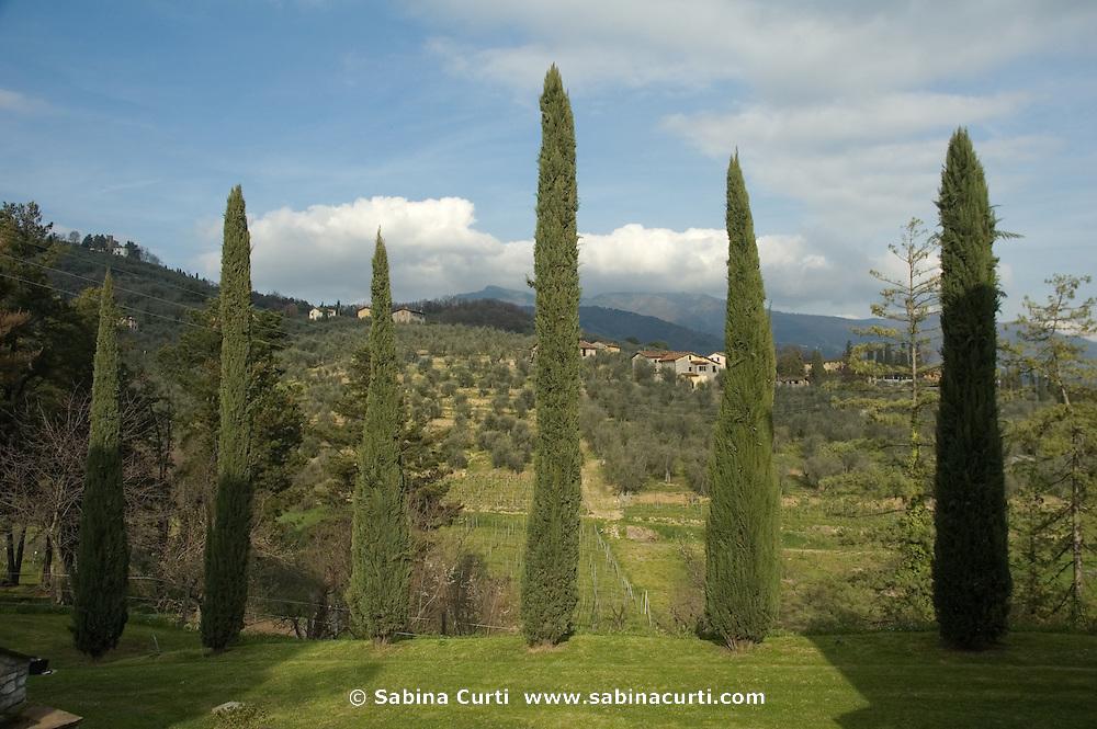Villa Baldacini near Lucca, Tuscany
