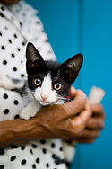 Close up of a senior adult Brazilian woman holding a kitten in Lencois, Brazil.