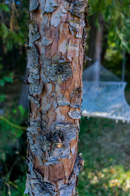 Tree and Hammock at Shasta View Treehouse, Mt. Shasta, California, US
