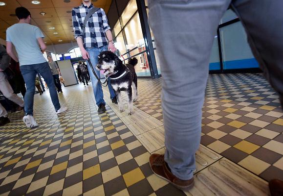 Nederland, Nijmegen, 10-4-2018Mensen met een visuele beperking hebben veel last van geleidelijnen die geblokkeerd worden door andere mensen, fietsen of afval. Foto: Flip Franssen