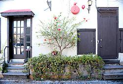 Still Life, Spanish Street