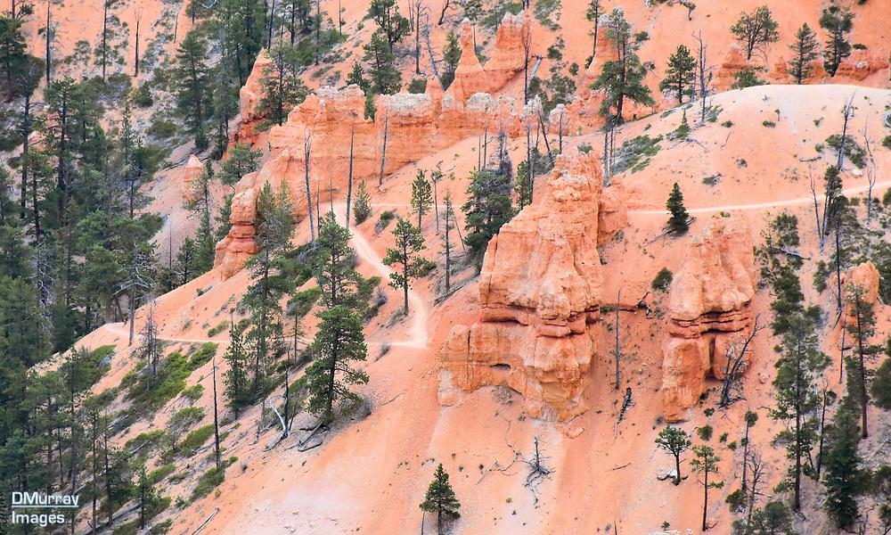 Trail, Bryce Canyon National Park, Utah, USA