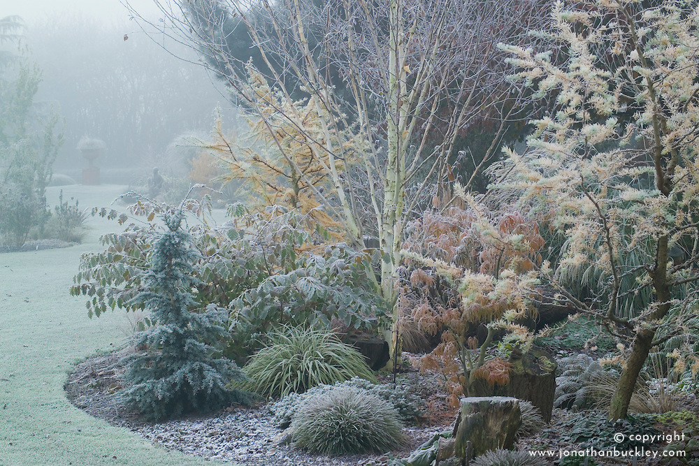 Larix decidua 'Little Bogle' syn L. europaea - larch, in the dell bed on a frosty winter's morning. Lawn curving towards urn focal point in the distance. Design: John Massey, Ashwood Nurseries