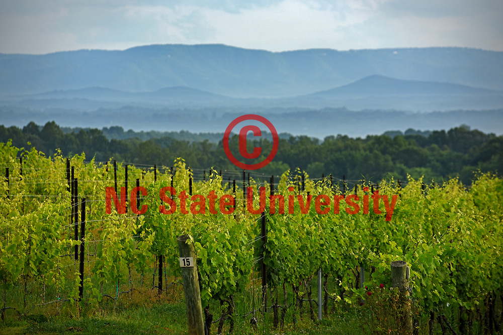 Mountains rise in the distance near Raffaldini Vineyards in Wilkes County.