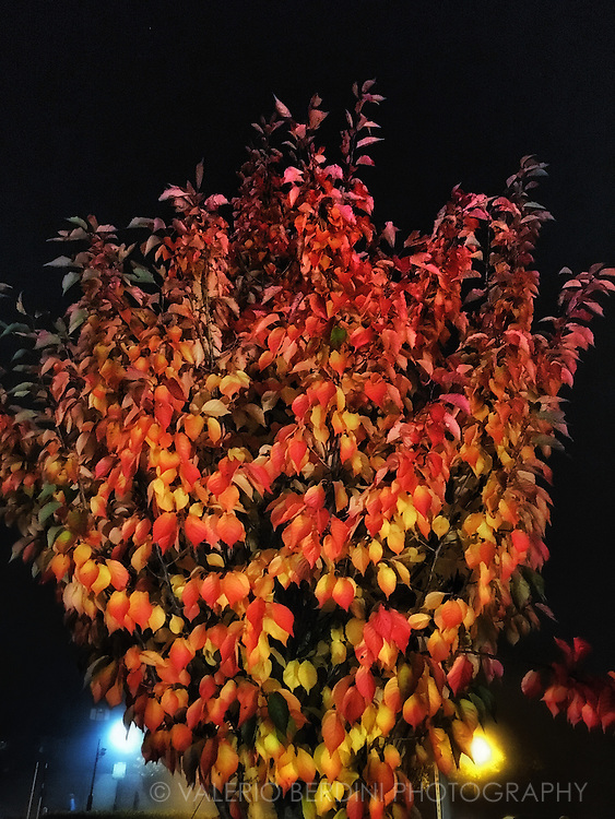 Nighttime foliage<br />