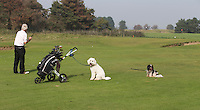 SANDWICH (GB) - Dogs on the golfcourse. The Prince's Golf Club. COPYRIGHT KOEN SUYK