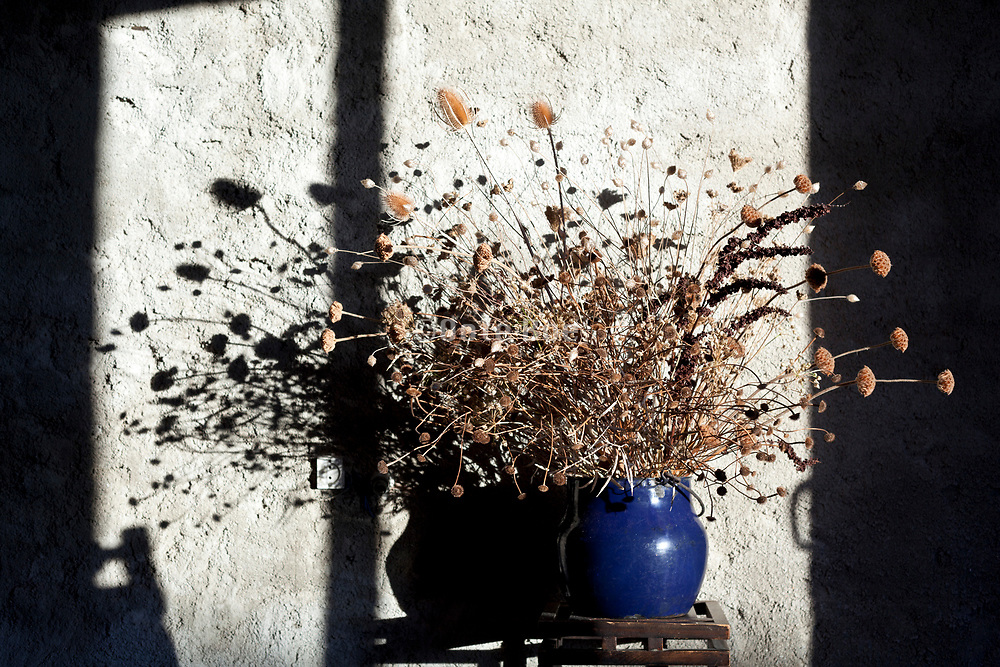 large dried wild flowers and plants bouquet standing in a bright morning sunshine against a rough grey cement wall