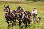 Horse Drawn Mowing