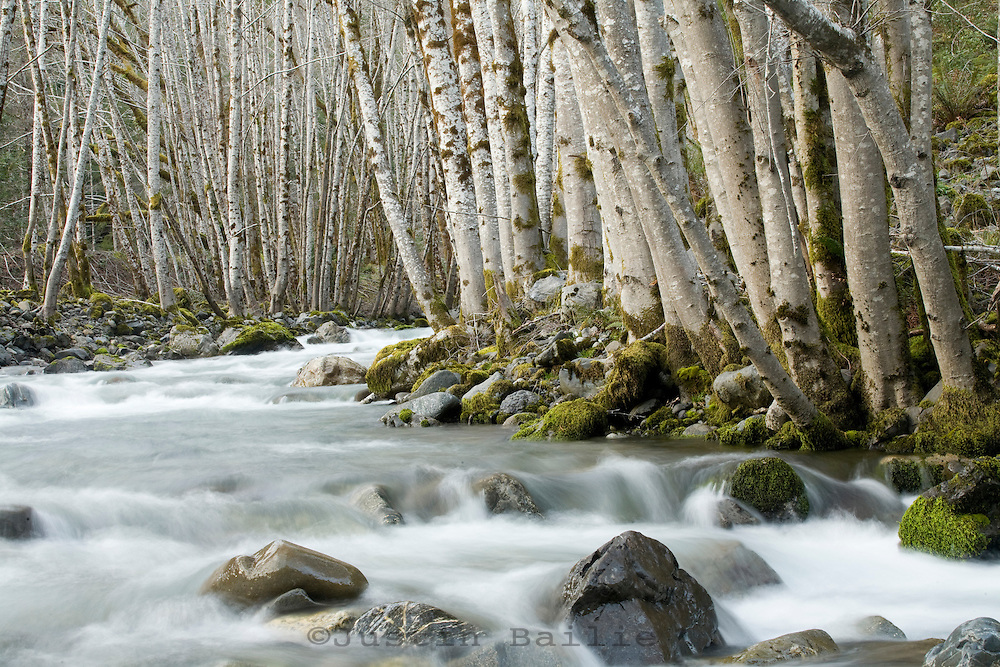 Scenic image of small tributary of the Chetco River in Southern Oregon.