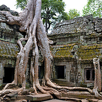 Famous Spung Tree at Ta Prohm in Angkor Archaeological Park, Cambodia <br />